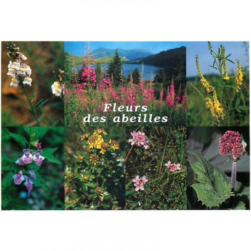 Carte postale Fleurs des abeilles
