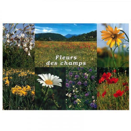 Carte postale Fleurs des champs