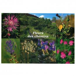 Carte postale Fleurs des chemins