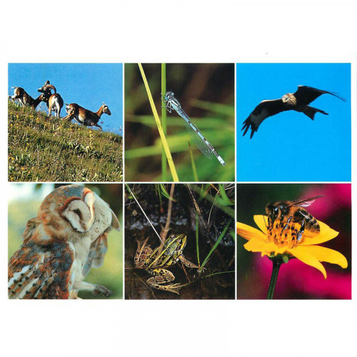 Carte postale Faune du Massif central