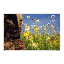 Poster «L'arrivée des fleurs»
