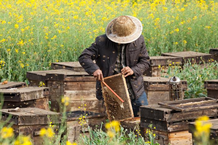 Devoirs et obligations de l'apiculteur