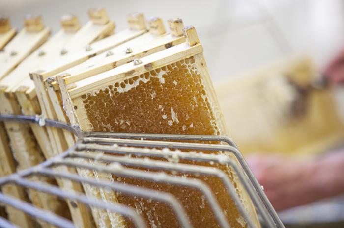 Extracteur à miel