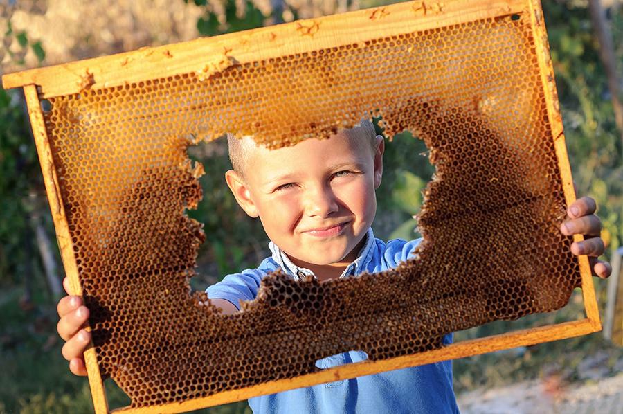 Enfant débutant apiculteur