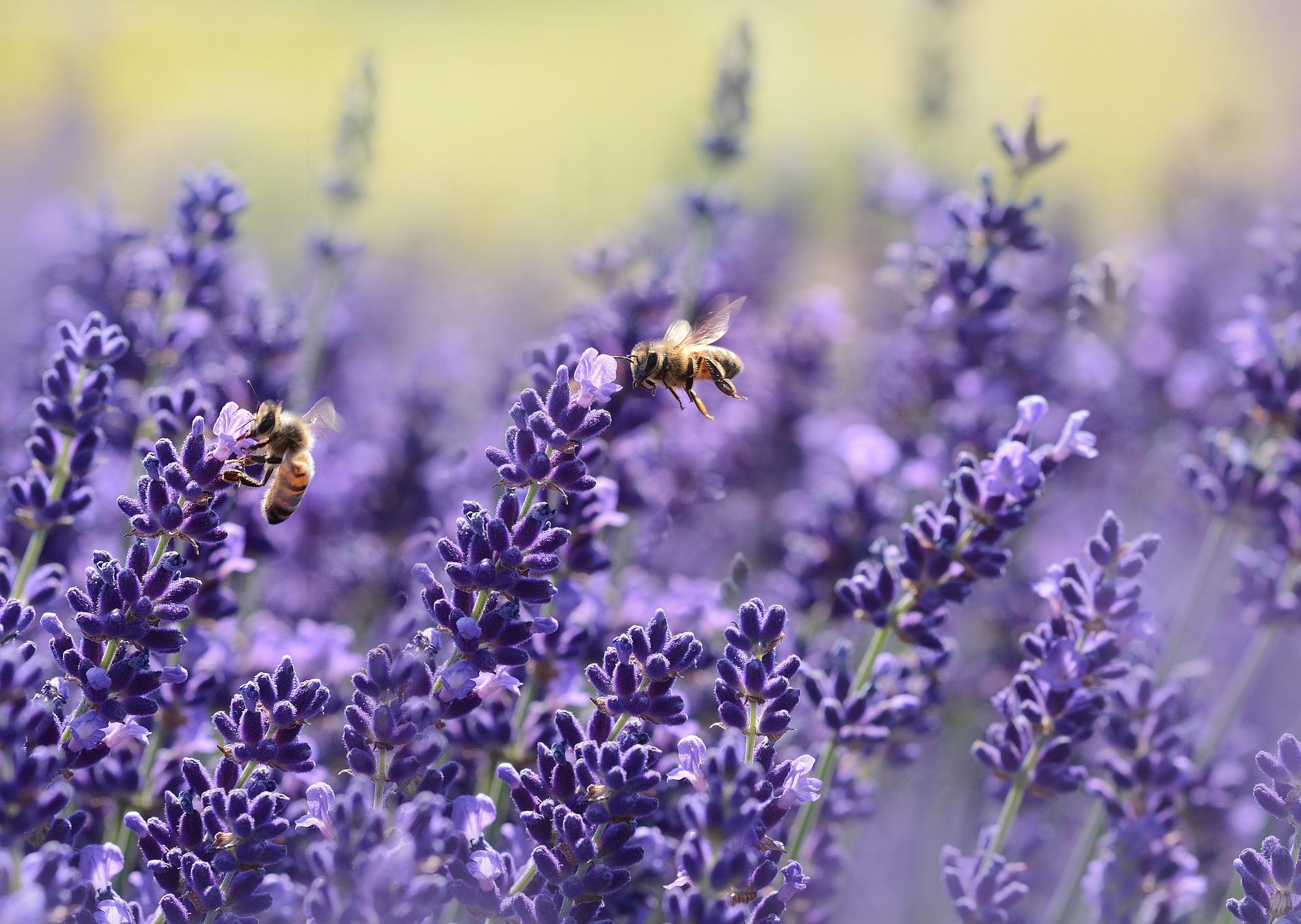 Quelles Fleurs Et Plantes Planter Pres De Votre Rucher
