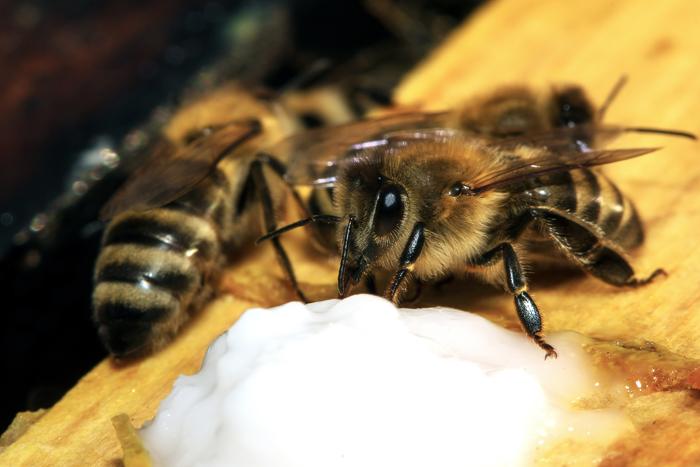 Le nourrissement des abeilles