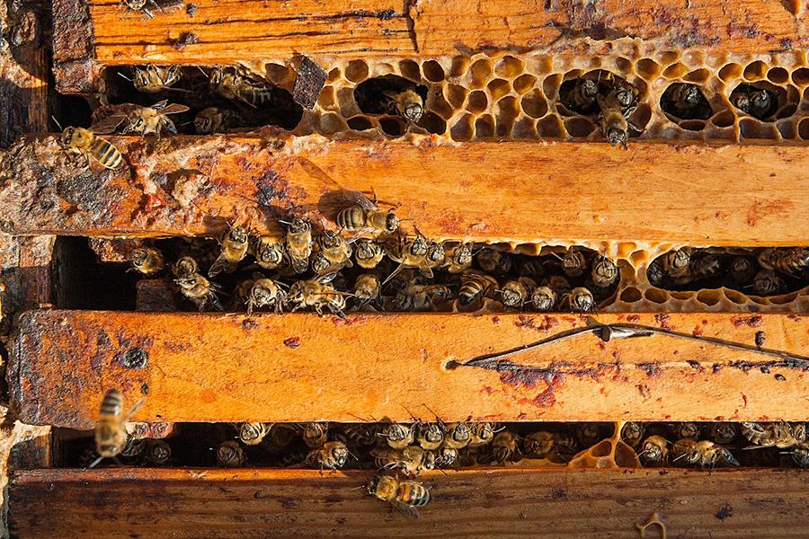 Organisation de la ruche