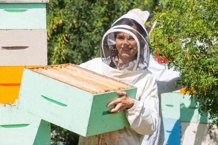 Peindre ses ruches