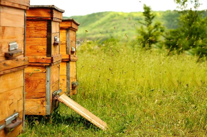 Traiter et protéger les ruches