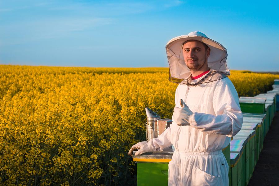 Apiculteur devant ses ruches