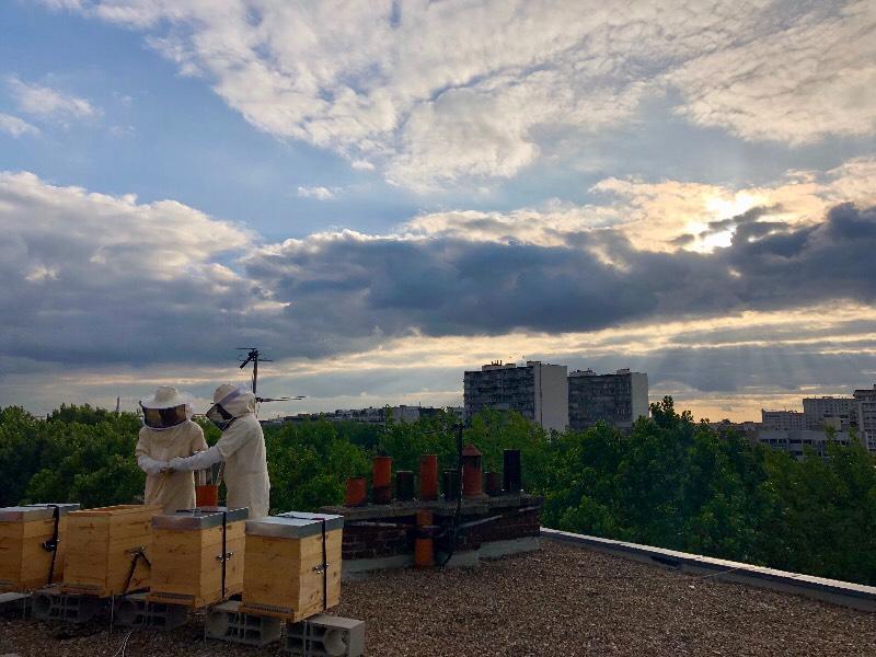 Le coucher des abeilles parisiennes