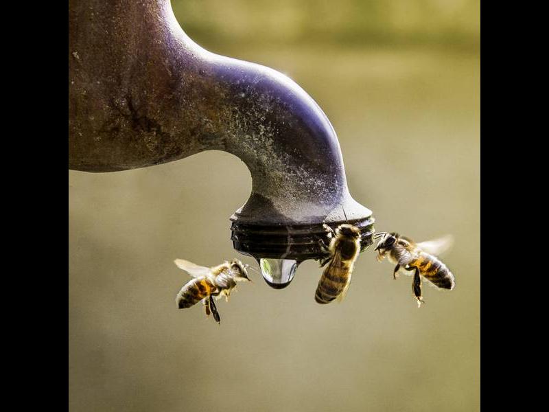 Bar à abeilles