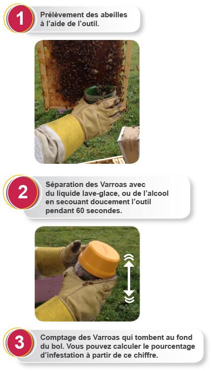 Mode d'emploi Varroa EasyCheck