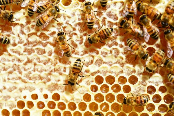 Les essaim d'abeilles et les neurones