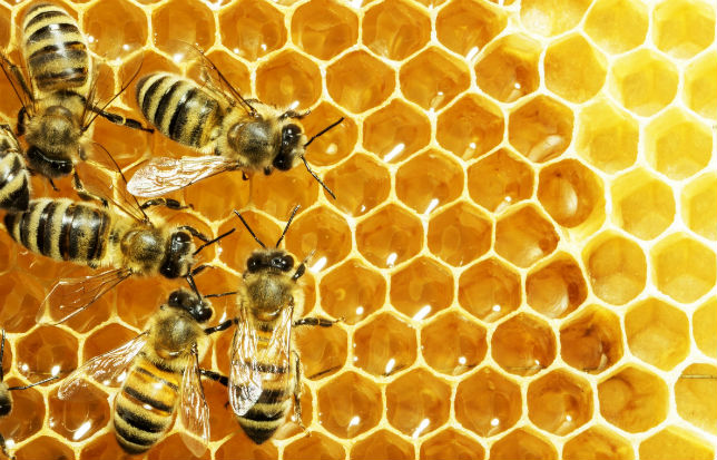 Les alvéoles des abeilles