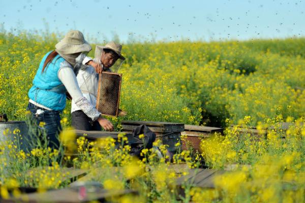 L'apiculture en Chine
