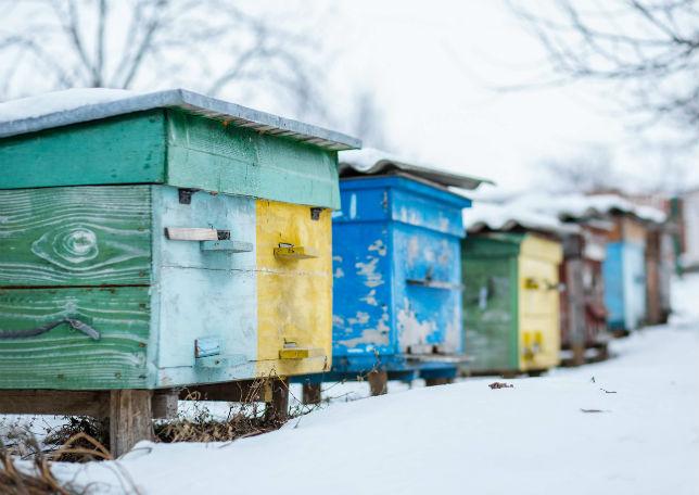L'apiculture en Russie