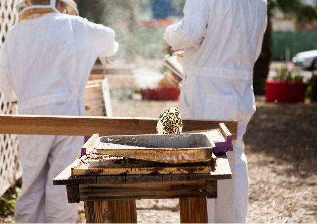 L'apiculture à la ville et à la campagne