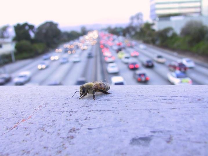apiculture sur les toits