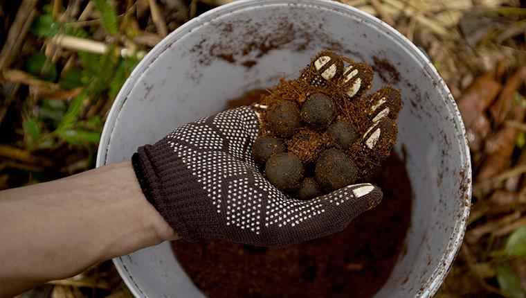 Balles de graines pour les abeilles