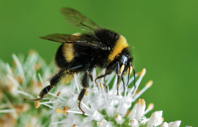 les abeilles au mexique