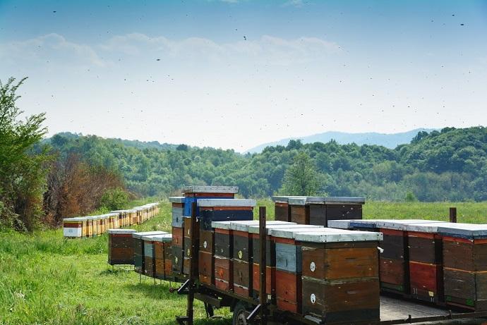 Diviser des ruches en apiculture