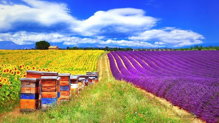 emplacement d'une ruche