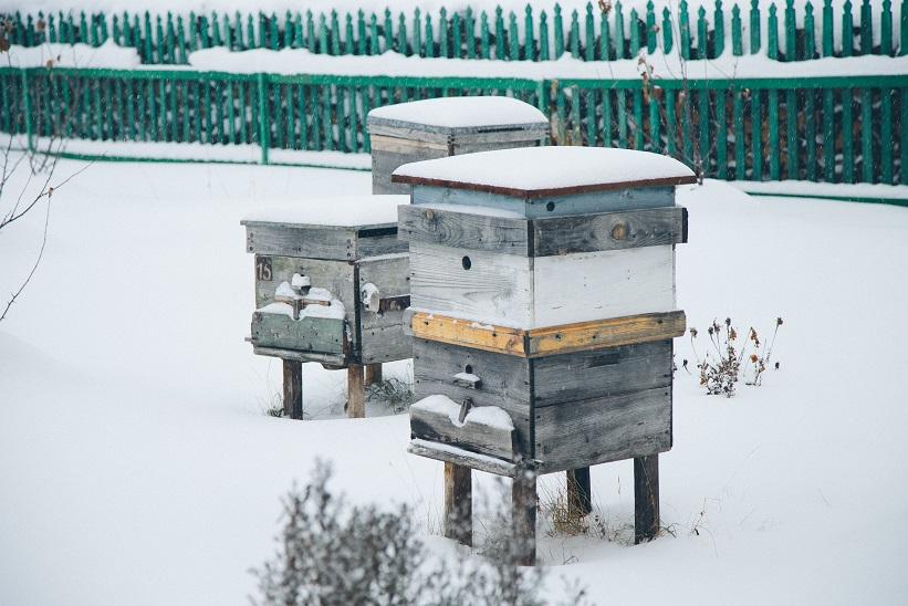 les abeilles en hiver
