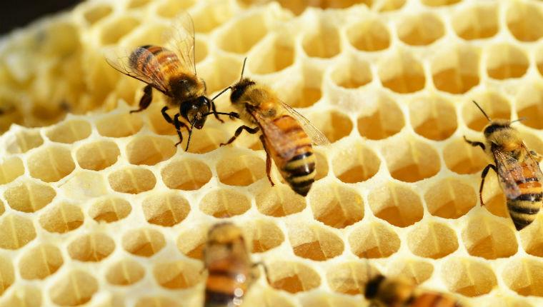 jeux abeilles