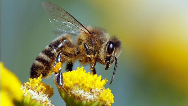 La journée mondiale des abeilles