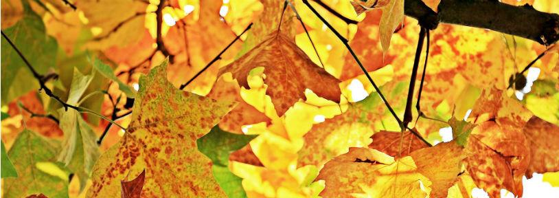 La visite d'automne des ruches