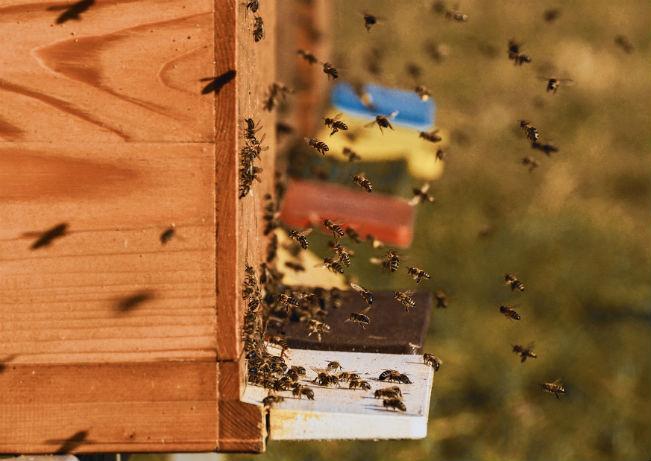 LeadBees startup pour gérer des ruches à distance