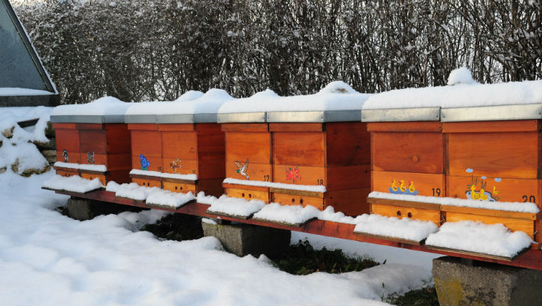 Les ruches en hivers