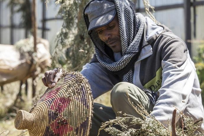miel ethiopien