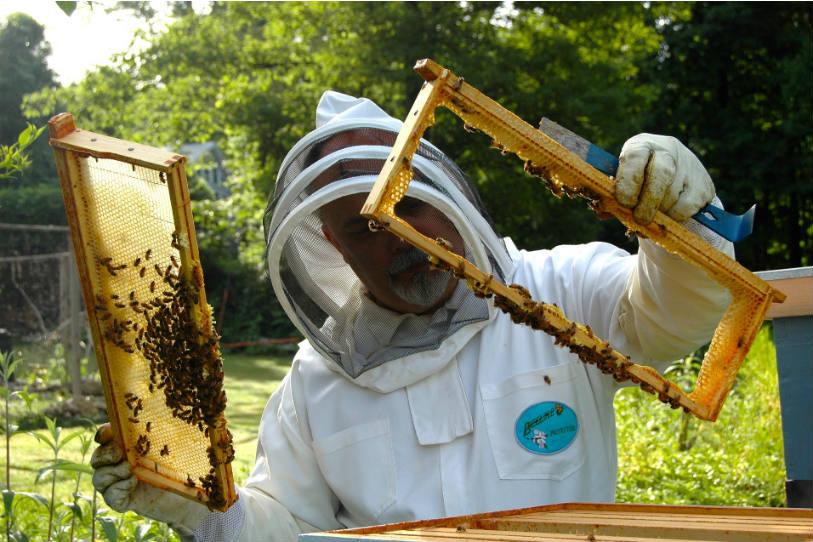 Législation et démarches pour sa première ruche