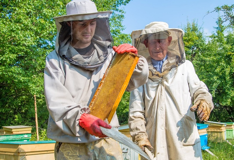 reinsertion et apiculture