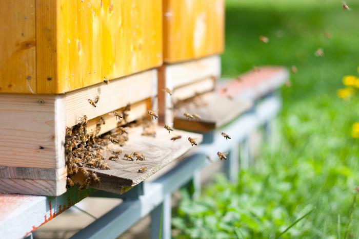 Réunir deux ruches faibles