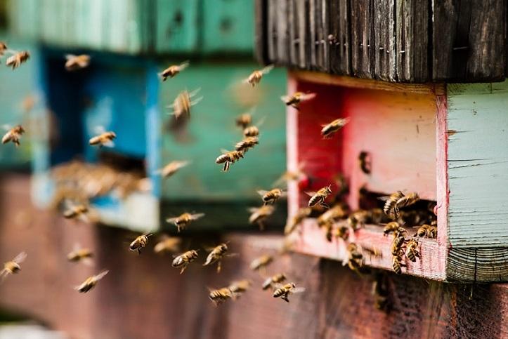 ruches-paris