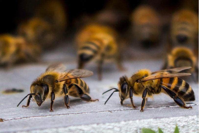 Bkeep et Hostabee sauvent les abeilles
