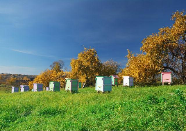 La visite pré-hivernale des ruches