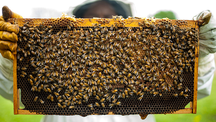 What are the different professions of the beekeeper?